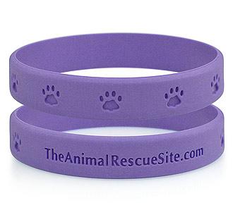 animalband.jpg